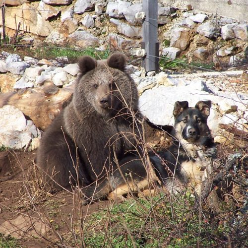 SHELTER FOR YOUNG BEARS KUTEREVO